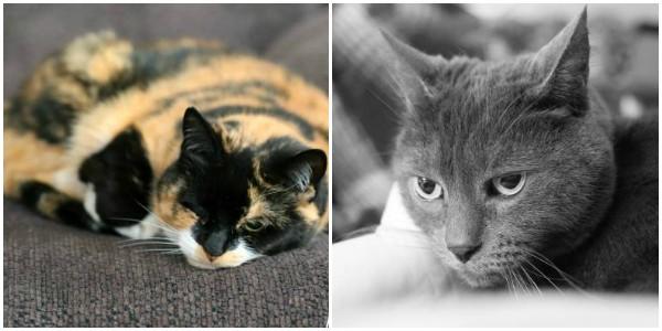 Jolie and Nermal Cat