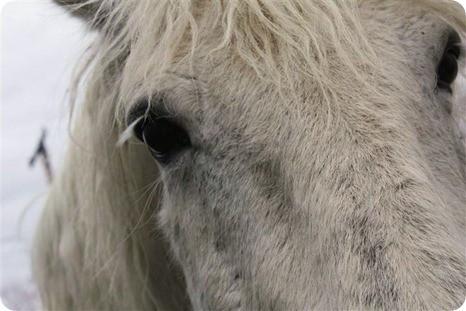Horse 1 - Copy