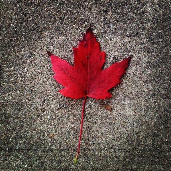 Maple Leaf {Nutmeg Nanny}