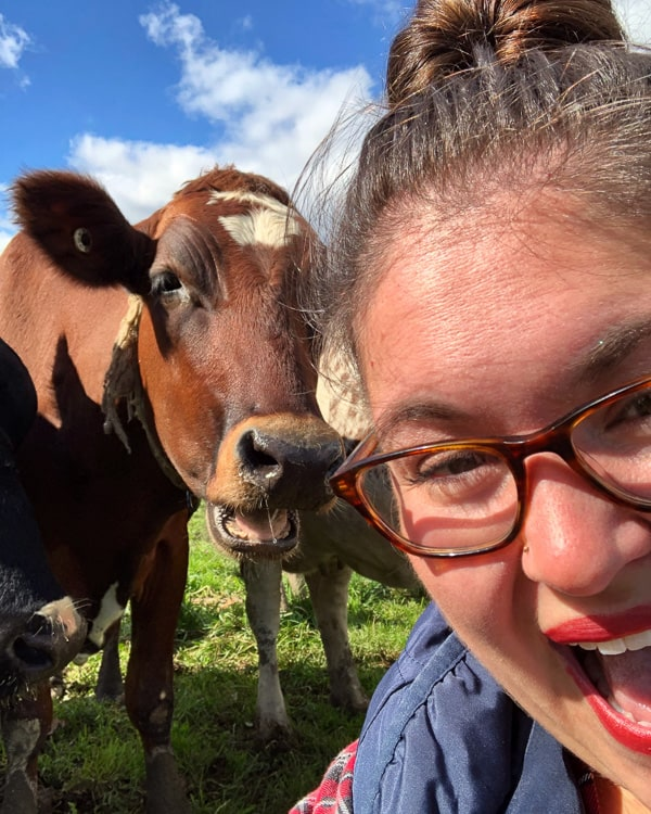 If you have always wondered what it's like to visit a dairy farm I have you covered! Back in October, I toured Dellavale Farm and their new Cabot Creamery Co-operative plaid barn. I also got up close and personal with a few cute cows! You'll love this dairy farm tour!