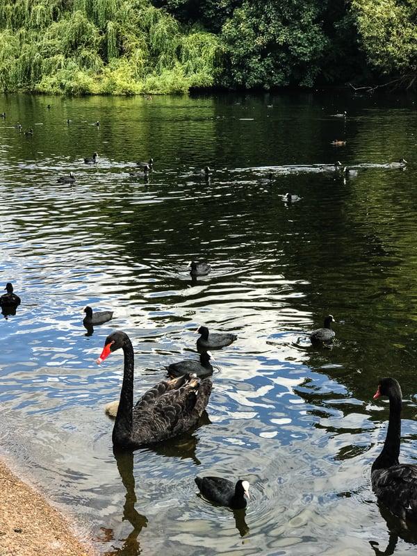St. James's Park London tRavel guide