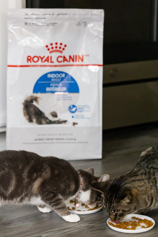 2 cats eating royal canin cat food