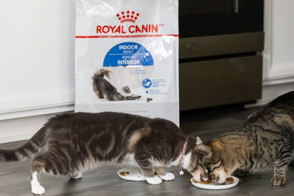 2 cats eating royal canin food
