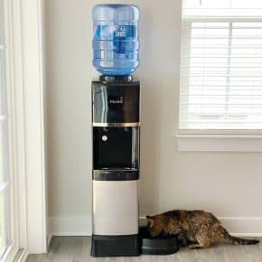 cat drinking from the pet water fountain
